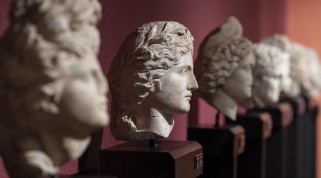 Arts Collection Website Design